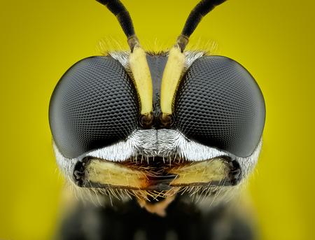 Blokhoofdwespje.. - ik heb ca 75 fotos samengevoegd doormiddel van focusstacking .  Gemaakt met canon 6D en de canon mpe65mm - foto door marcojongsma op 15-07-2020 - deze foto bevat: macro, wit, zon, wesp, natuur, tegenlicht, zomer, insect, dauw, vlindertuin, dof, bokeh, focusstacking, focus stacking, extreme macro, extrememacro
