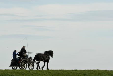Met paard en wagen (en hondje)