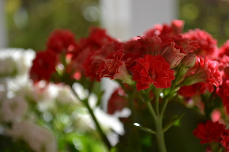 Bloemetjes in bloei