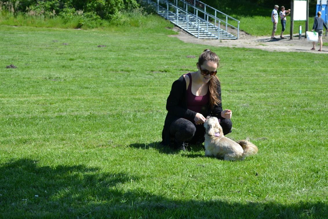 Naar buiten met ons hondje - - - foto door xxxxAimeee op 09-04-2015 - deze foto bevat: zon, lente, natuur, spelen, dieren, huisdier, hond, meisje, zonnebril, lentekriebels, Shih Tzu