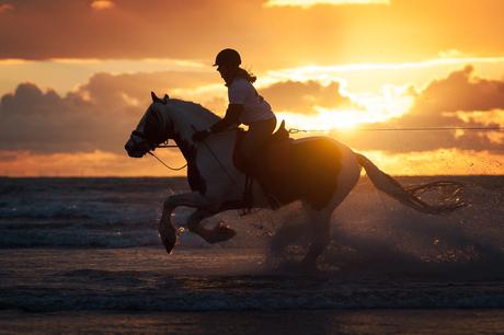 WK Horse Boarding IJmuiden