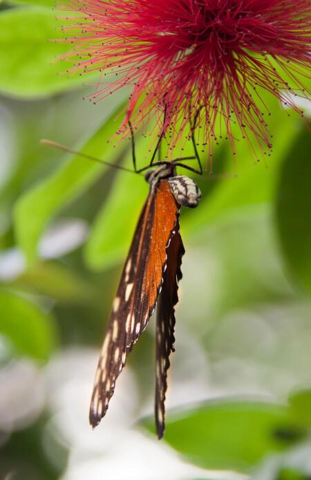 Vlinder - In de vlindertuin van Artis - foto door Liekie1982 op 13-04-2015 - deze foto bevat: dierentuin, vlinder, artis