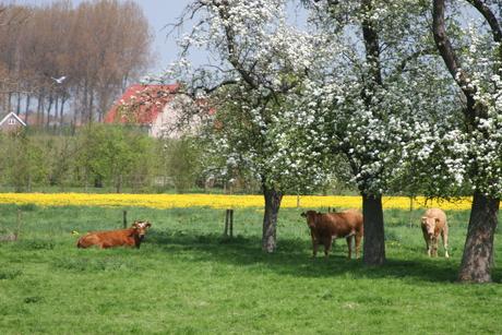 Voorjaar in Zuid-Beveland