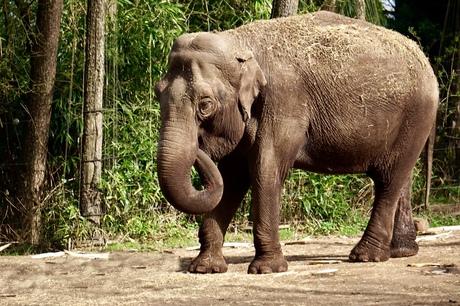 Prachtige olifant.