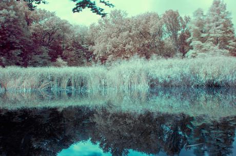 The IR Pond