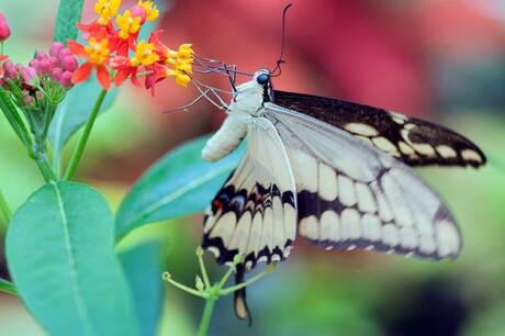 Vlinder botanische-tuin