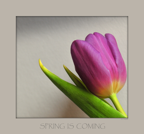 Spring is coming-4