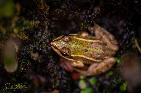 Frogs in my little garden....