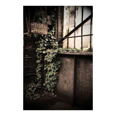 Growing by ST-Steel - Altijd mooi om te zien hoe oude gebouwen weer terug genomen worden door de natuur.  Alle bedankt voor de recties op mijn vorige foto en nog een pre - foto door peterrochat op 25-01-2009 - deze foto bevat: staal, natuur, ijzer, urban, industrie, verlaten, verval, vergane, urbex, glorie, groeien, growing, st-steel, staalhandel, ijzergandel