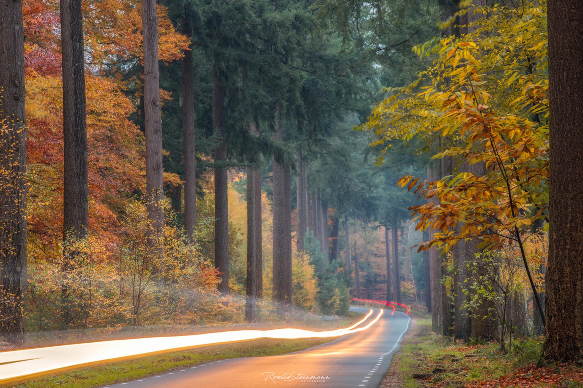 Faster than light - Hoewel de foto's van de weg naar het Speulderbos rustig en sfeervol lijkt, is de waarheid het tegendeel. Het is een drukke verbindingsweg en daarom i - foto door steinmann.rp op 17-11-2019 - deze foto bevat: groen, boom, natuur, veluwe, geel, licht, herfst, landschap, mist, bos, nederland, najaar, speulderbos, langesluitertijd, hoge veluwe