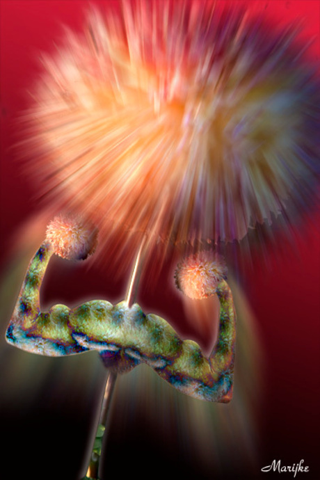 ** Flower Power **