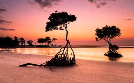 Dreamy Mangrove