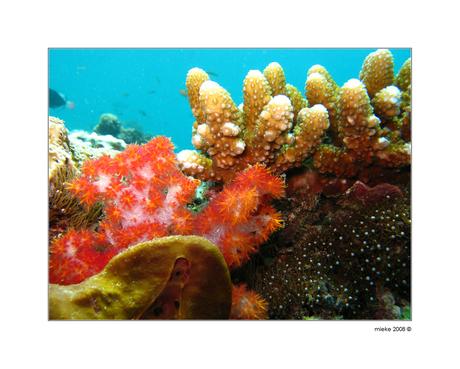 Onderwaterlandschap