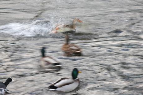 'waterplezier'