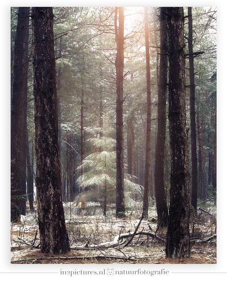 Winter in het Weerterbos