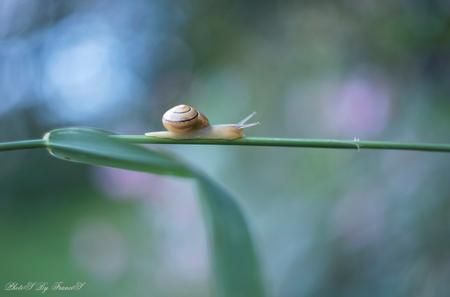 """On my way - Ook ik ben weer """"on my way"""" na een hele drukke periode. Ga weer een inhaalslag maken met jullie foto's, alhoewel dat bijna niet te doen is.  Maar ik  - foto door Francis-Dost op 08-08-2018 - deze foto bevat: macro, zon, natuur, slak, licht, zomer, insect, dof, bokeh"""