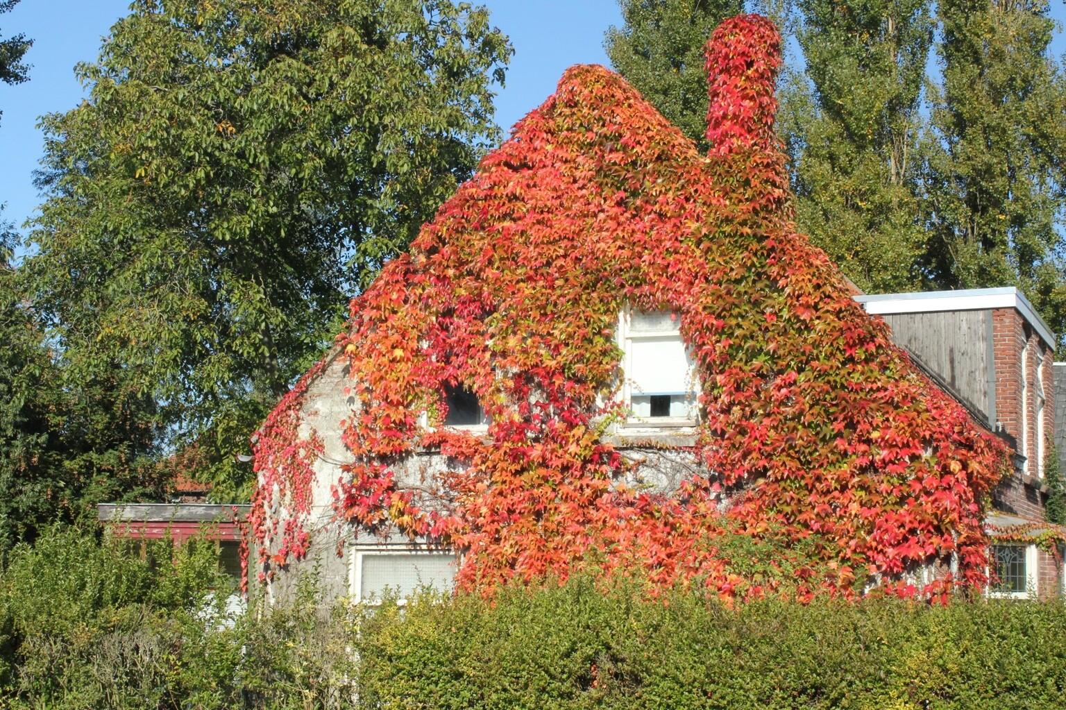 Herfst 2020 - Herfstsfeer - foto door Robertus_zoom op 16-04-2021 - locatie: Zoetermeer, Nederland - deze foto bevat: bloem, fabriek, lucht, blad, gebouw, boom, venster, vegetatie, gras, biome