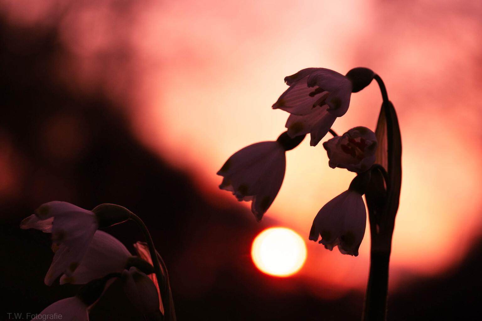 avondrood - avondrood geeft water in de sloot - foto door ton61 op 05-05-2021 - locatie: Oosterhout, Nederland - deze foto bevat: gewervelde, lucht, oranje, wolk, mensen in de natuur, gebaar, nagloeien, zonsondergang, gelukkig, bloemblaadje