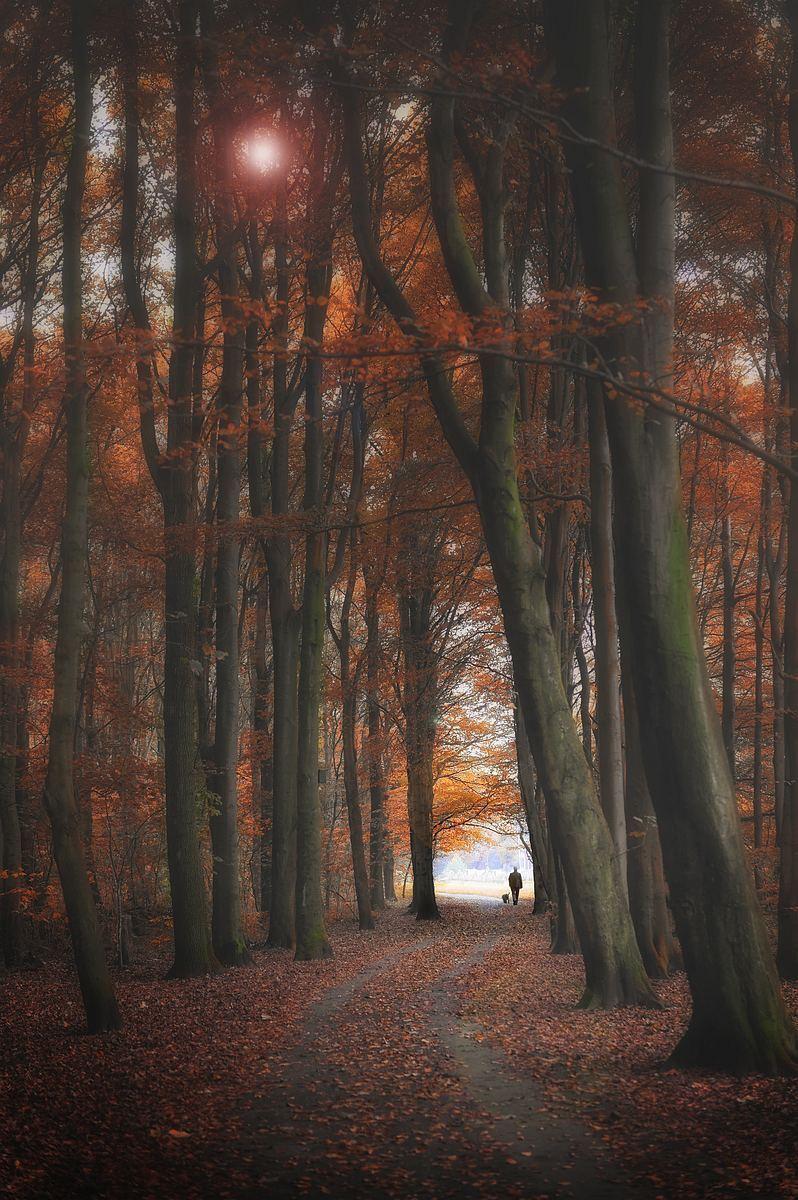 het Kralingse bos - man met hond - foto door Feline op 12-04-2021 - locatie: Rotterdam, Nederland - deze foto bevat: rotterdam, kralingse bos, herfst, man, hond, bruin, atmosfeer, natuurlijk landschap, takje, hout, fabriek, kofferbak, boom, zonlicht, bladverliezend