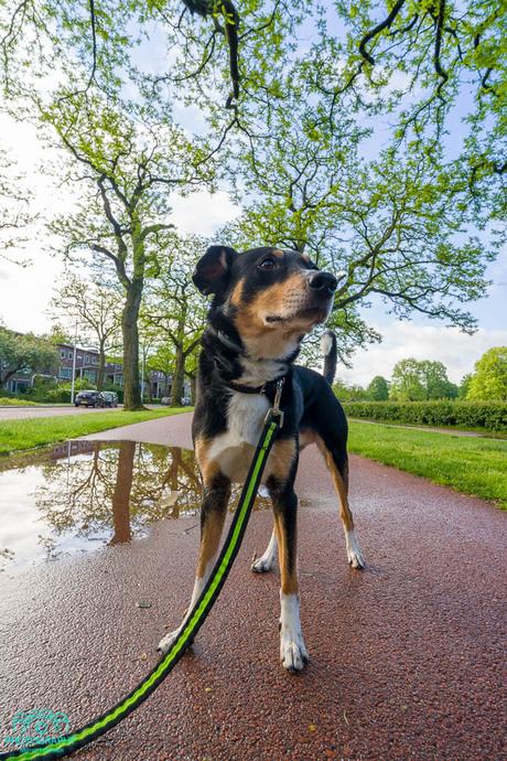 a walk with Benji