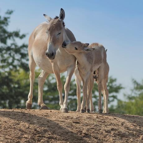 De liefde tussen moeder en kind