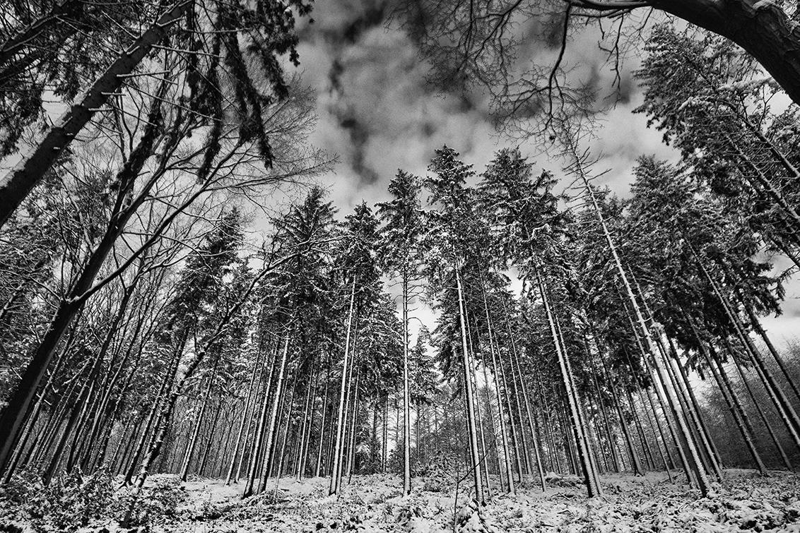 Nothing but Me and the crunching Snow - Vijlen Zuid Limburg tijdens Lock down ;)  - foto door violator op 11-04-2021 - locatie: 6294 Vijlen, Nederland - deze foto bevat: fabriek, plant gemeenschap, ecoregio, natuurlijk landschap, blad, hout, boom, kofferbak, takje, afdeling