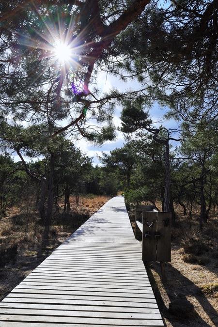 Zonnige middag - Na een paar dagen slecht weer zag ik het opklaren en ben eropuit getrokken met deze foto als resultaat.  - foto door BobEnsink op 13-04-2021 - deze foto bevat: fabriek, afdeling, hout, boom, lucht, zonlicht, natuurlijk landschap, vegetatie, gras, landschap
