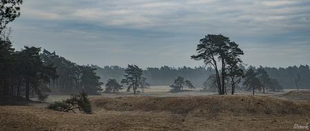 Ommen-Junne - De Sahara - De zandverstuiving de Sahara is een verborgen pareltje in het Vechtdal. Een uitgestrekt stuifzandgebied in boswachterij Ommen, net iets buiten Ommen. - foto door copper-krijger op 16-04-2021 - deze foto bevat: de sahara, ommen, overijssel, zandverstuiving, heiig, staatsbosbeheer, natuurlijk landschap, recreatie, zoom.nl, #zoomnl, wolk, lucht, fabriek, natuurlijk landschap, boom, land veel, grasland, gewoon, houtachtige plant, gras