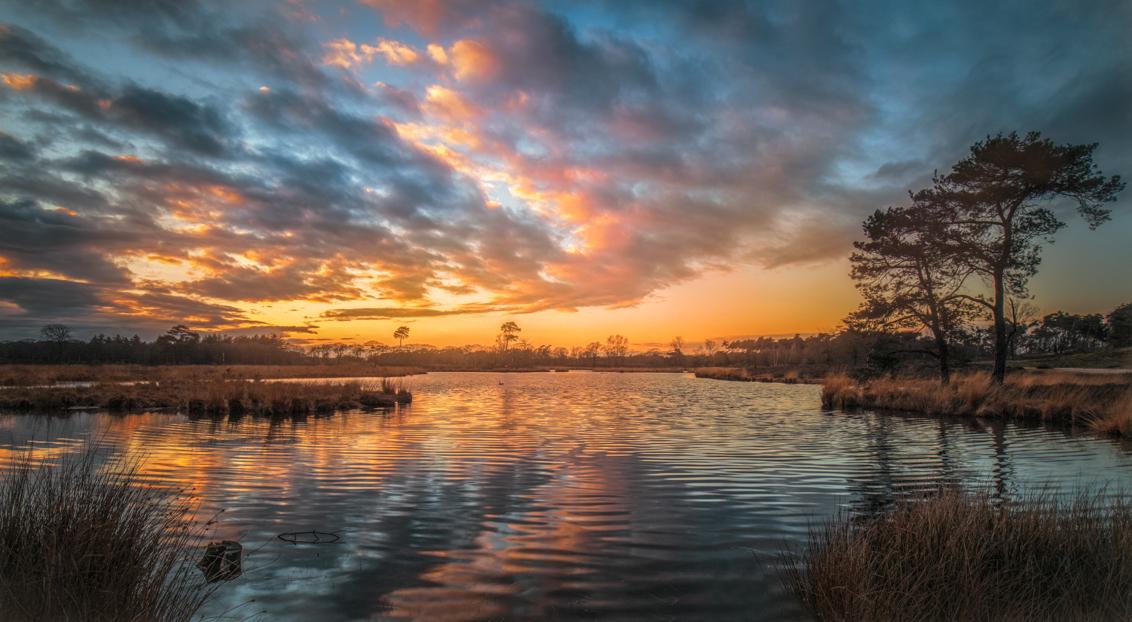 Dutch Sunset - Een mooi avond aan  de  Overasseltse en Hatertse Vennen  - foto door Berthe2 op 09-04-2021 - deze foto bevat: water, wolk, lucht, watervoorraden, atmosfeer, nagloeien, fabriek, natuurlijk landschap, boom, zonlicht