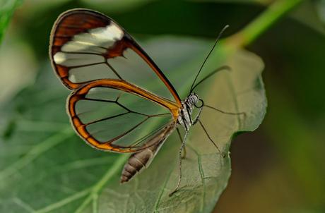 Doorkijk Vlinder