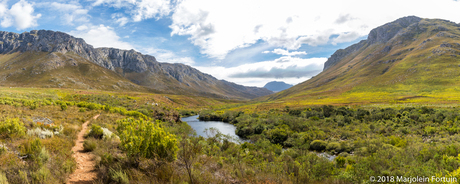 Kogelberg natuur reservaat, Zuid-Afrika