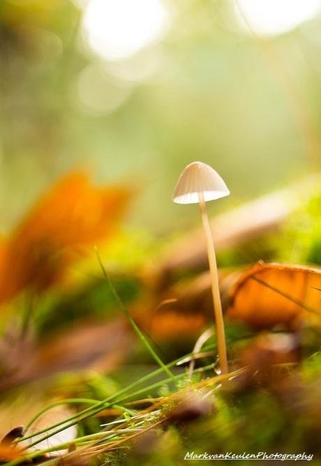 Mushroom or lamp