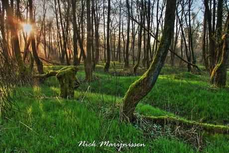 Sunrise in de biesbosch