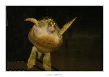 Soep Schildpad