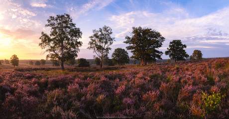 Heathland Panorama