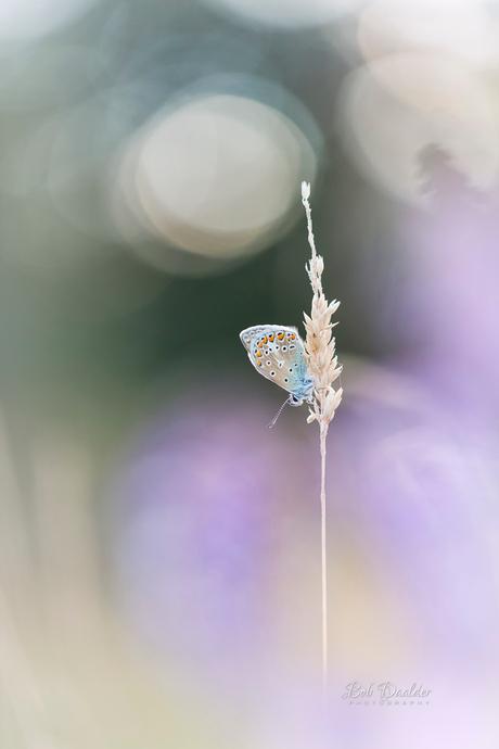 Butterfly Softness