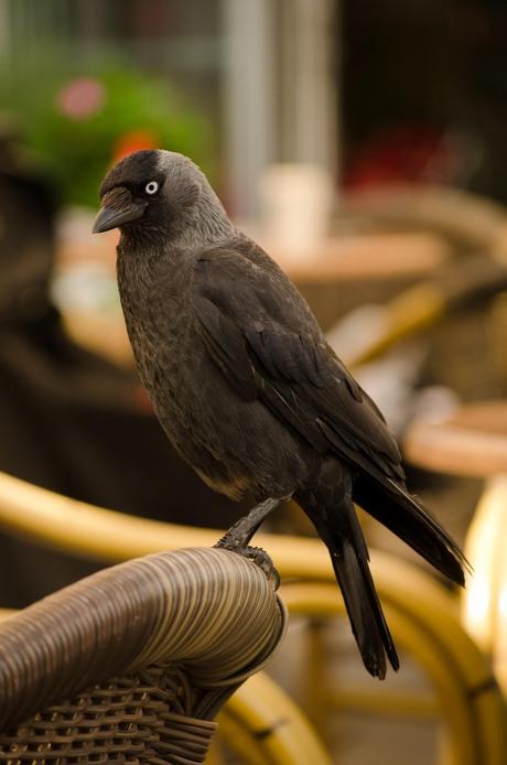 brutale vogel heeft de hele wereld