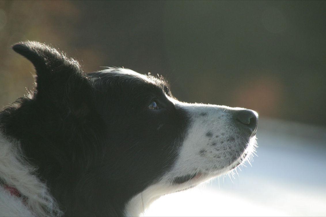 Micky - Micky met besneeuwde achtergrond - foto door mono_no_aware op 19-01-2011 - deze foto bevat: hond