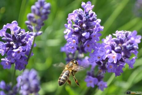 De bloementjes en de bijtjes