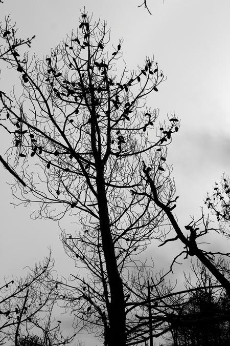 Denappels zitten er nog aan! - Roet route, Schoorl. - foto door yvonnevandermeer op 28-03-2013 - deze foto bevat: duinen, schoorl, zwart wit, roet route
