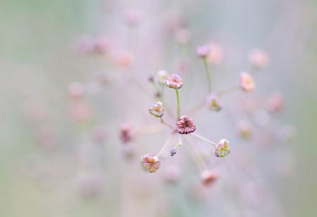 Teder - Uitgebloeid, maar nog steeds fraai om te zien. - foto door birgitte61 op 09-09-2019 - deze foto bevat: roze, macro, bloem, zomer, uitgebloeid, dof