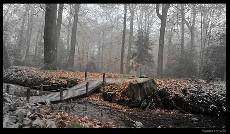 De mysterie van het bos