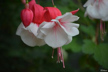 bloemenfotografie