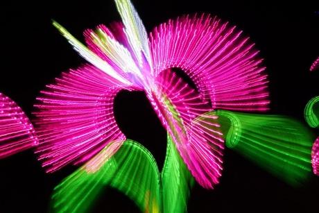 China Lights Flower