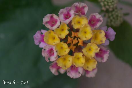 Macro dag bloem