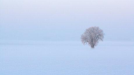 (Zaterdag 4 februari 2012) MAAGDELIJK witte sneeuw overlopend in de mist. 8.39 uur.jpg.jpg