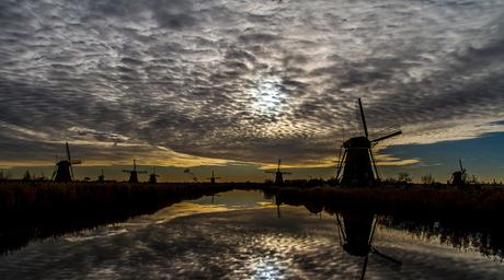 Dutch Glorie