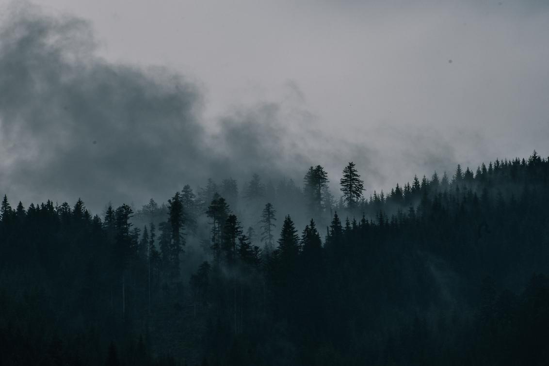 Mistige bossen - - - foto door jiscalucia op 05-03-2021 - deze foto bevat: lucht, wolken, foggy, natuur, herfst, winter, avond, zonsondergang, landschap, mist, bos, bomen, bergen, oostenrijk, alpen, mistig bos, misty forest, mystisch