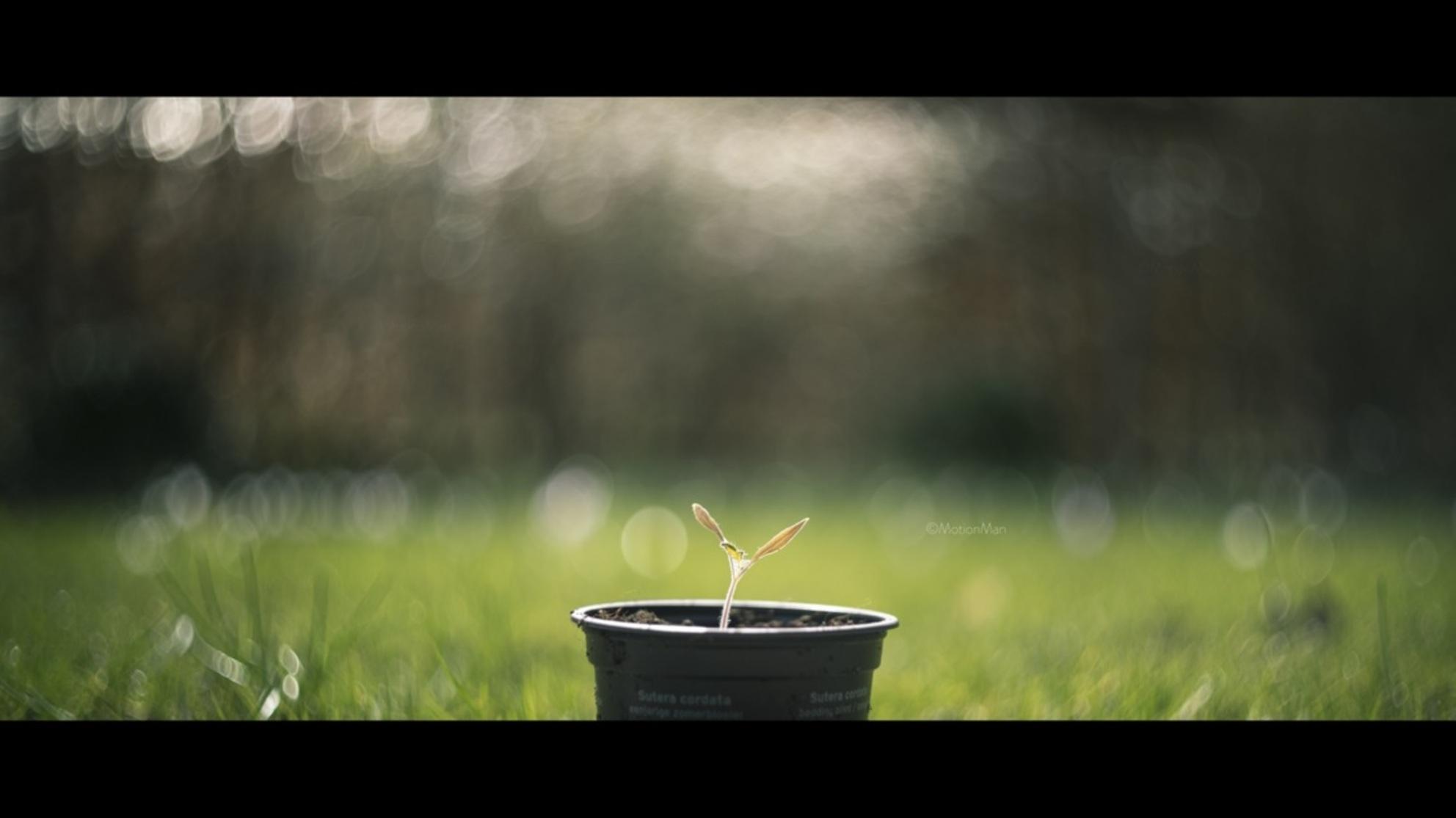 Sun, shine on me - Plantje staat te wachten op meer zon.  Gemaakt met de Helios 77M-4.  ©MotionMan 2017 - foto door motionman op 12-03-2017 - deze foto bevat: gras, groen, zon, plant, lente, klein, zomer, zaadjes, plantje, swirl, jong, potje, scherptediepte, zonneschijn, dof, zaad, pot, potten, oogsten, schattig, begin, bokeh, helios, zaaien, ontkiemen, cinematisch, swirley, swirly