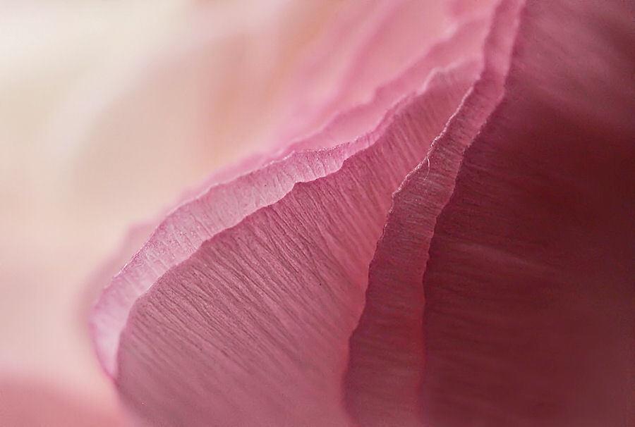 Abstract in rose - een abstract in roze kleur.  bedankt weer voor de reacties op mijn vorige foto, doet altijd goed om ze te krijgen. - foto door tania1971 op 10-12-2011 - deze foto bevat: roze, abstract